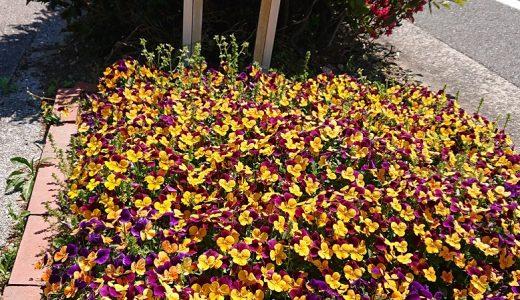 4月30日 お花って、癒されますね!「北2号公園」