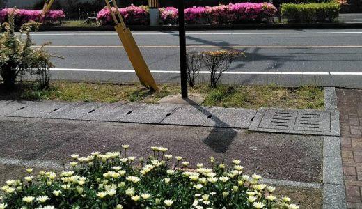 5月6日 地域を散歩しました。お花って、癒されますね!「さて、どこでしょう?,」