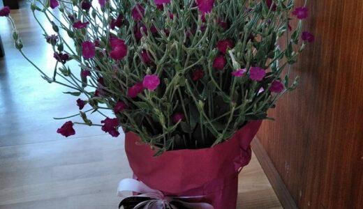6月8日 公民館に素敵な花の贈り物