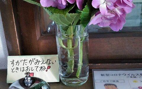 6月11日 新たなる紫陽花の花