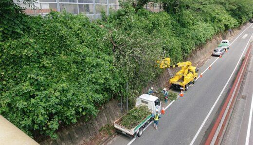 6月14日 国道3号線バイパスの倒れかけた桜を撤収
